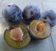 Fiche Technique – Production végétale : La Prune de Provence (Perdrigon Violet)